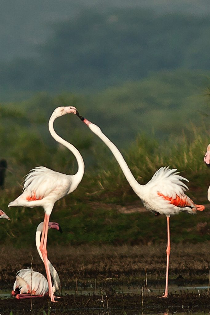 Fancy visiting a flamboyance of flamingos?